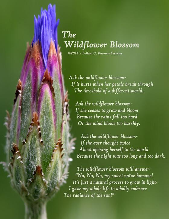 close-up of a wildflower blossom