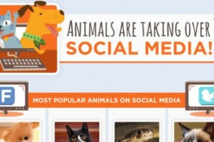 nimals-are-taking-over-social-media