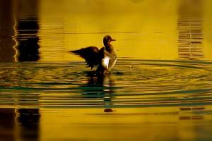 The Golden Ripple of Faith 770