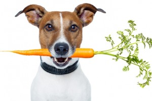 bigstock-Healthy-Dog-With-A-Carrot-33478421 x 770