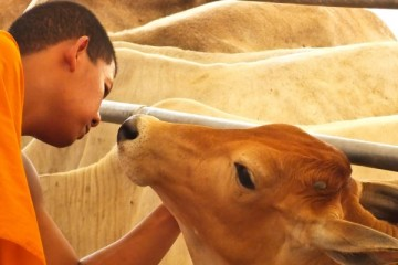 compassion-for-animals_OMTimes