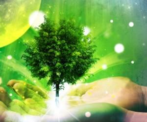 grow-the-garden_OMTimes