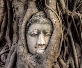Buddha_OMTimes