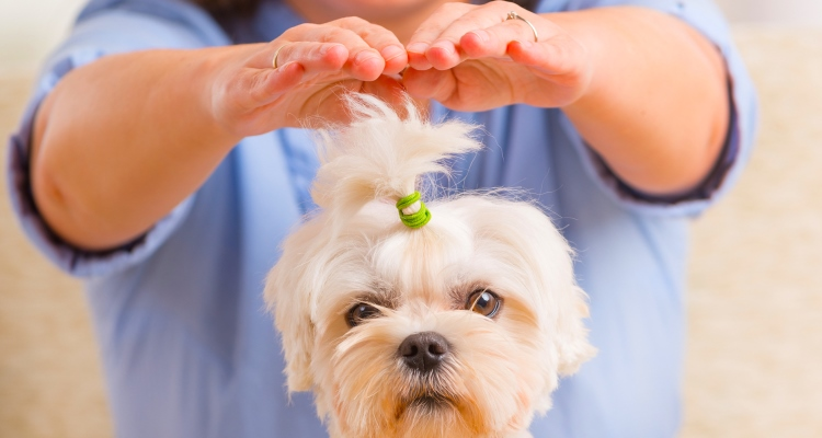 chakra-tune-up-for-animals_OMTimes