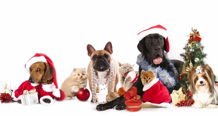 prep-your-pet-for-the-holidays_OMTimes
