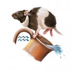 Year of the Rat forecast for Aquarius